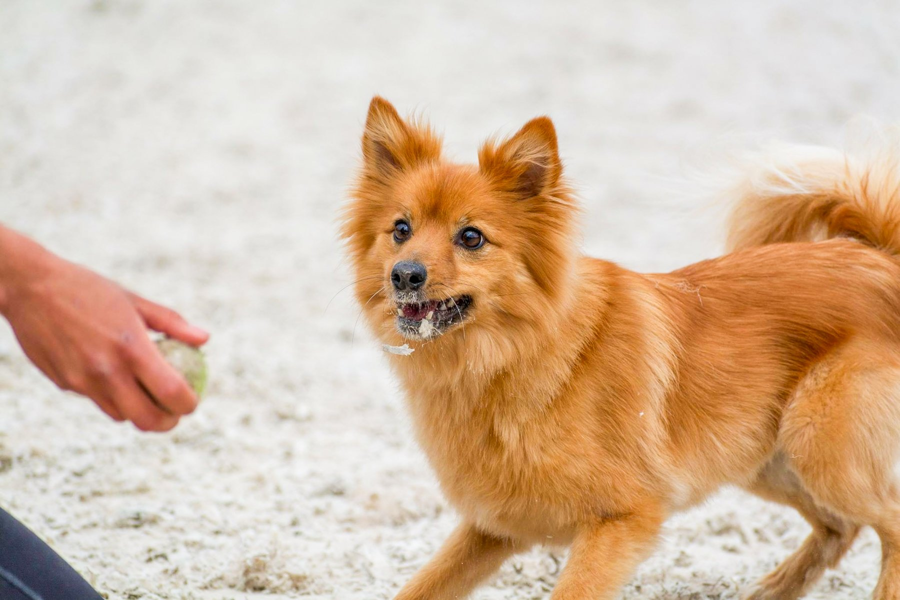 What To Do If Your Dog Doesn't Bring The Ball Back