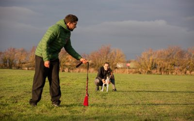 Dog Tugging Tips & Common Mistakes
