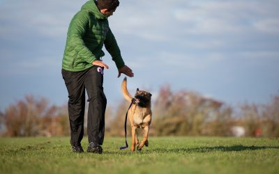 What To Do if Your Dog Won't Play With Toys